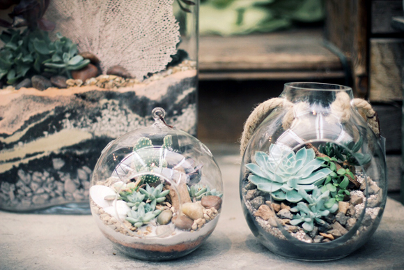 Desert Terrariums With Terrain