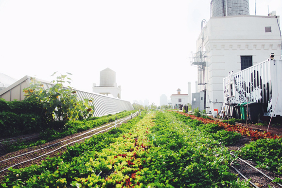 Brooklyn Grange: A Rooftop Urban Farm