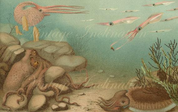 1923 rare Cephalopoda Nautilus Octopus Chromolithograph original antique sea life ocean print by VintageInclination