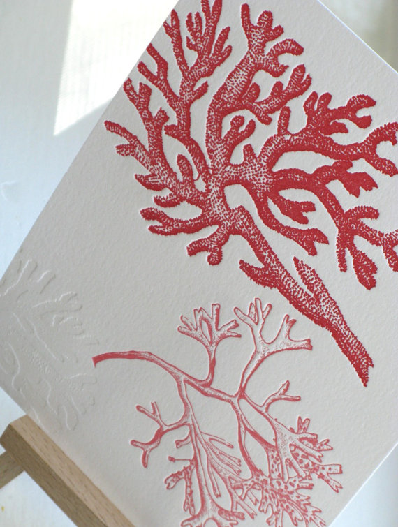 Coral of 5 x 7 Print (Letterpress) – 50 percent off! by thepaperpeony