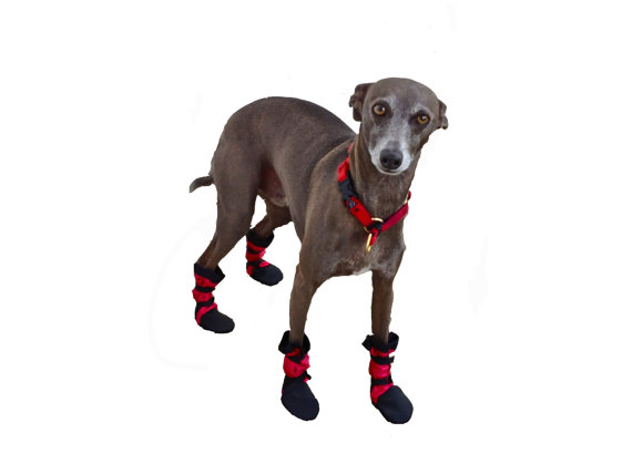 Iggy's, Italian Greyhound, Small Breed Nylon Custom Dog Boots Lined with Fleece by Woofsdogboots