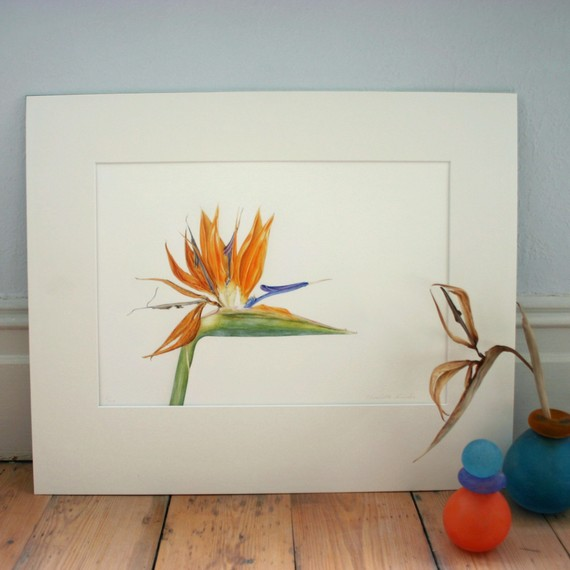 Bird of Paradise botanical illustration-mounted Strelitzia print-art for living room-gift for art lover-exotic flower painting-wall art by TheBotanicalConcept